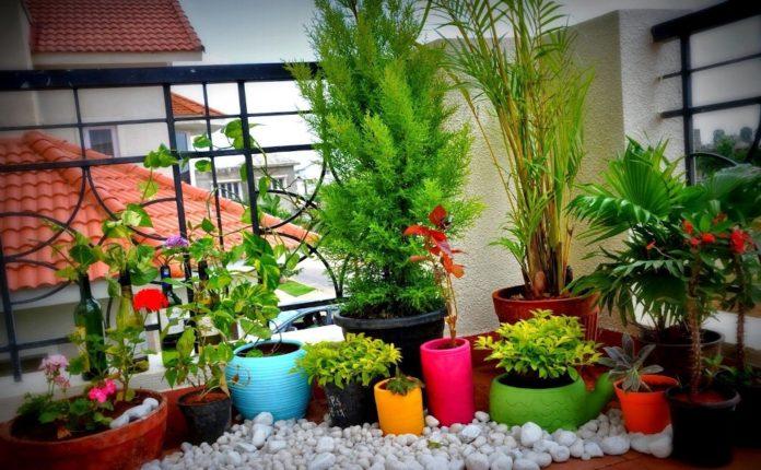 balcony-garden-ideas